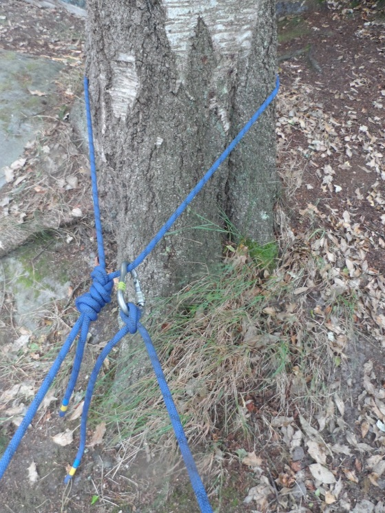 8 round a tree